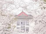 南京漫游记丨花枝春野与白色秋天